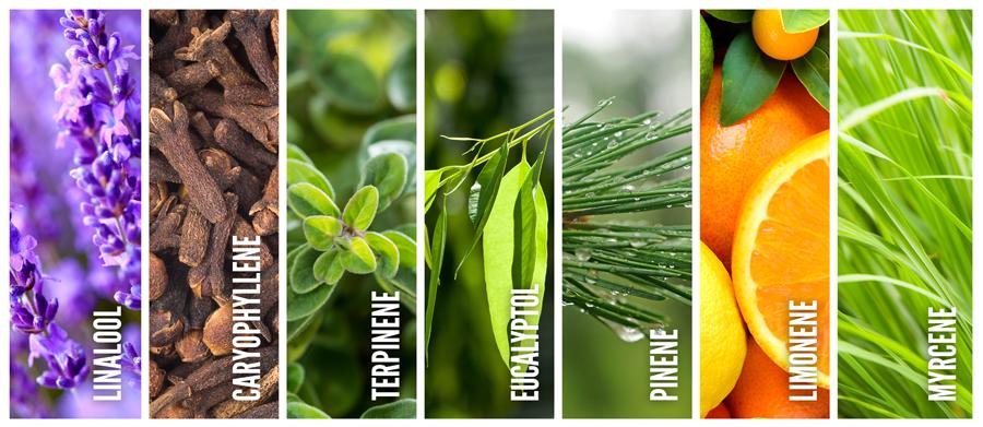 tipos de terpenes